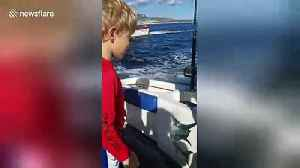 Cute sea lion hitches a lift on boat [Video]