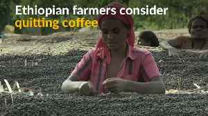Coffee price slump in Ethiopia leaves farmers earning less than a cent a cup [Video]