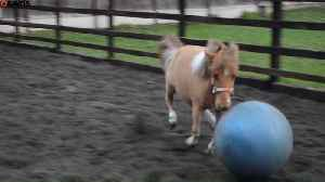 Pony becomes obsessed with playing FOOTBALL [Video]