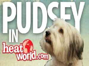 Ashleigh teaches your dog to be just like Pudsey from Britain's Got Talent 2012 [Video]