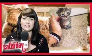 Caturday with heat's Anna Lewis - Episode 3 [Video]
