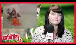 Caturday with heat's Anna Lewis - Episode 4 [Video]