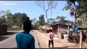 Locals panic as herd of 30 elephants marches through Indian village [Video]