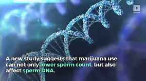 Cannabis Can Alter the Genetic Makeup of Sperm [Video]