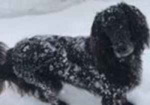 Cool Customer: Dog Enjoys Bounding Through Snow in Switzerland [Video]