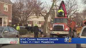 City Removes Dangerous Trees After CBS2 Demands Answers [Video]