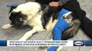 Hero dog that saved couple from fire now needs surgeries after accident [Video]