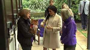Meghan plays with dogs as new patron of animal charity [Video]