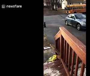 Touching footage of a dog greeting his owner off of the school bus [Video]
