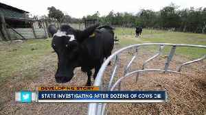 Cattle deaths could be linked to potential toxic feed [Video]