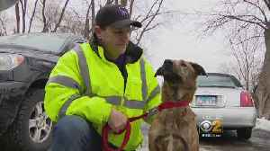 Questions About Whether Kennels Should Always Be Staffed After West Chicago Fire Kills 30 Dogs [Video]