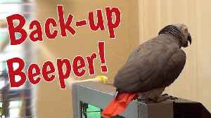 Talking parrot gives warning as he backs up [Video]