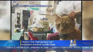Remy The Cat Becomes Campus Celebrity At Harvard [Video]