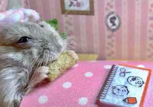 Elderly Hamster Relaxes With a Treat [Video]