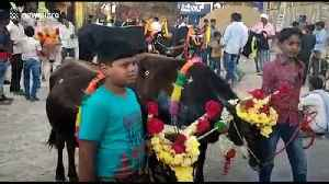 Cattle and their owners run through flames in south India for Hindu ritual [Video]