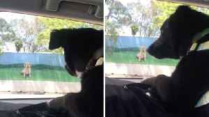 Hilarious video shows confused pooch barking at billboard of dog [Video]