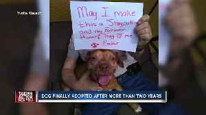 Dog that spent two and a half years in shelter finally gets forever home [Video]