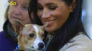 Phone Ringing Off the Hook for Shelter Dog Who Palled Around with Meghan Markle [Video]