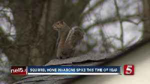Squirrels, rats causing problems for homes as they look for ways to stay warm [Video]