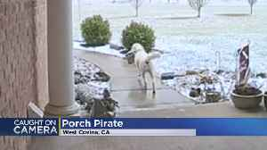 Security Cam Catches 'Porch Pirate' Dog Steal Package [Video]