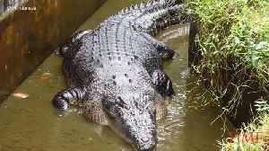 A Woman Was Mauled to Death by a Pet Crocodile in Indonesia [Video]