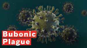 What Is Bubonic Plague? [Video]