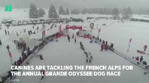 This Race Is One For The Dogs [Video]