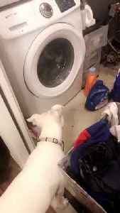 Curious Pup Head Tilts At Washing Machine [Video]