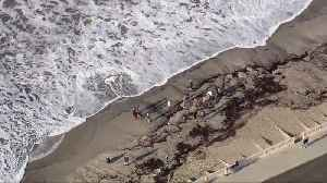 Whale Gets Beached In Malibu [Video]