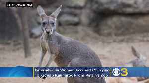 Pennsylvania Woman Tried To Kidnap Kangaroo From Petting Zoo, Take It To Florida, Police Say [Video]