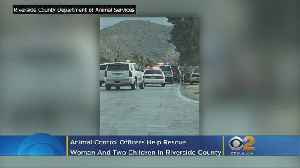 Kidnapped Mother, 2 Children Rescued In Yucca Valley Thanks To Animal Control Officers [Video]