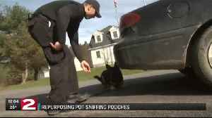 What happens to police drug detection dogs if pot is legalized in NY? [Video]