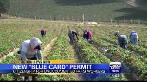 Proposed 'Blue Card' Permit Would Provide Path to Legal Citizenship [Video]