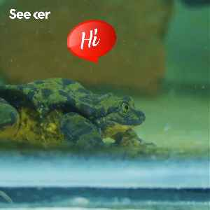 The World's Loneliest Frog Finds His Juliet [Video]