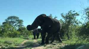Elephant Charges Towards Car [Video]