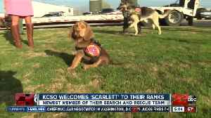 KCSO welcomes new bloodhound puppy to search and rescue unit [Video]