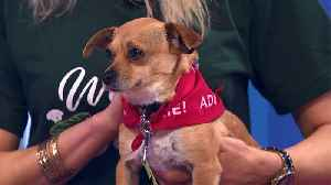 Pet of the Week: Cindy Needs a New Home [Video]