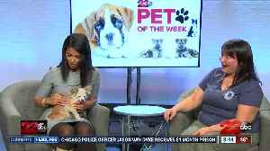 Pet of Week: 8-year-old Chihuahua Frida [Video]