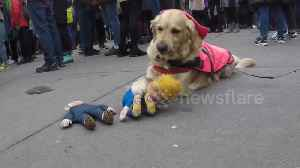 "Donald Trump doll mauled by ""vicious"" hound at London Women's March [Video]"