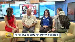 Florida Birds of Prey [Video]