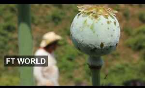 Risky Life Of Mexican Poppy Farmers | FT World [Video]