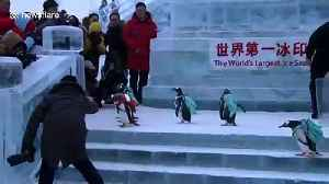 Penguins with backpacks attract visitors at Harbin Ice and Snow World [Video]