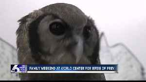 Family weekend at World Center for Birds of Prey [Video]