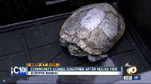 26 year old turtle among survivors of a house fire [Video]