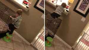 Crafty toddler finds way around baby gate by using dog cage to climb on to kitchen counter and get to snacks [Video]