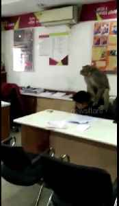 Cheeky monkey enters bank, takes employee as 'hostage' in New Delhi [Video]