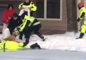 Retriever Retrieved: Firefighters Rescue Dog From Icy Pool at Cincinnati Apartment Block [Video]