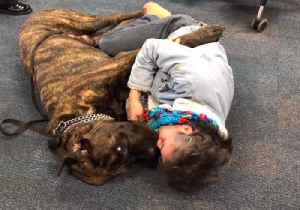 Giant Dog Gives Warm Hugs to Children With Special Needs [Video]