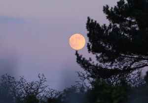Red Moon Rises Over London Cemetery Ahead of Eclipse [Video]