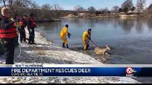 Olathe firefighters rescue deer from icy Lake Olathe [Video]